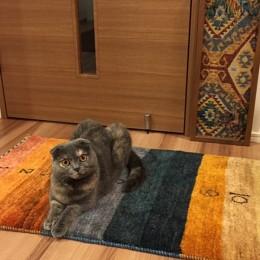 カレンダーギャッベ 猫2