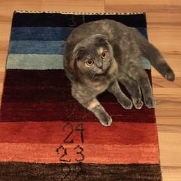 カレンダーギャッベ 猫