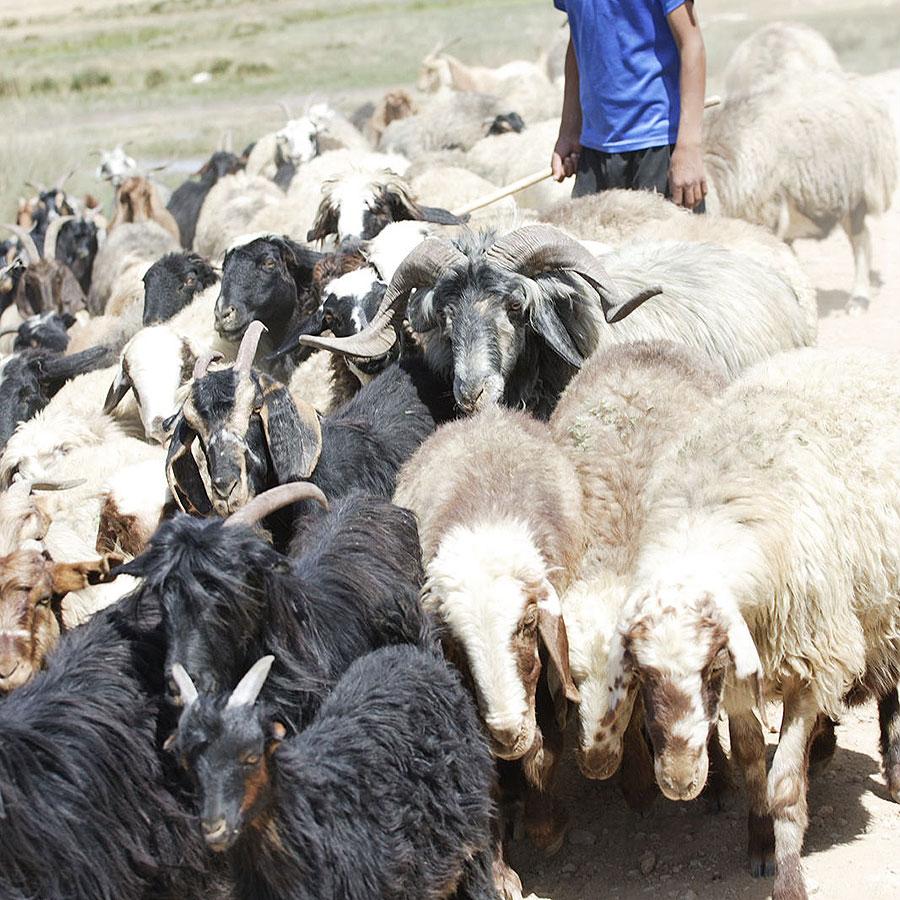 ギャッベ 羊毛